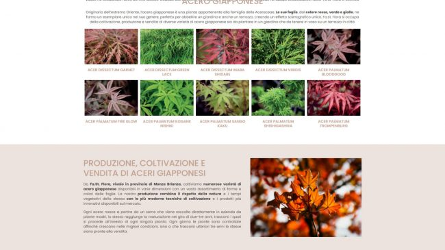 Fa.St. Flora Vivai – Produzione e vendita Aceri Giapponesi Monza